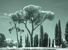 Farnese V
