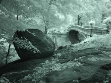 Central Park XXI